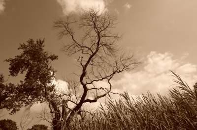 half-dead-half-alive-tree