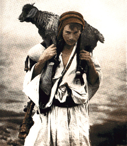 shepherd carry lamb