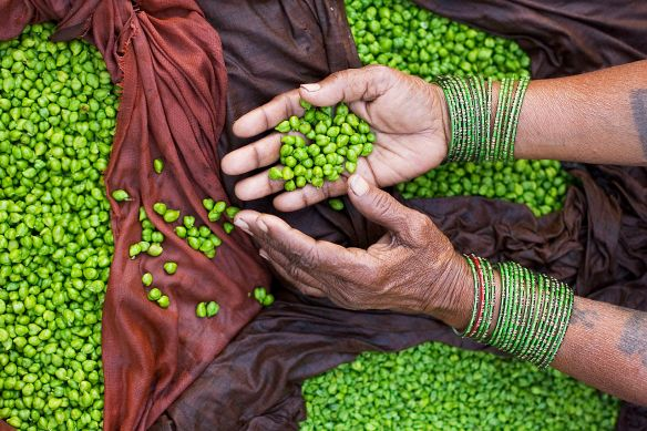 Indian street seller hands displaying green chickpeas. Photo by Jorge Royan via Wikimedia Commons