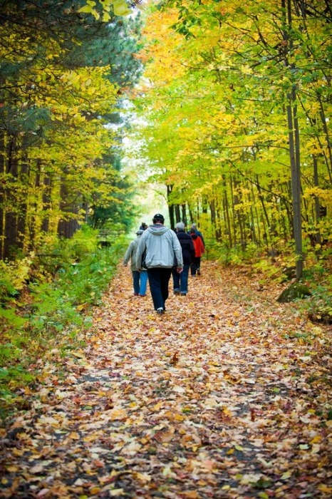 group-of-people-walking-path-woods