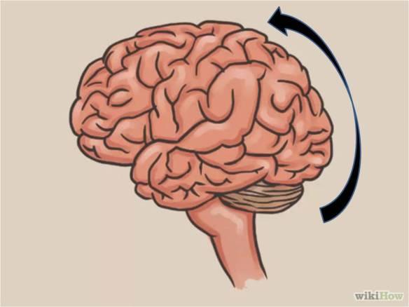 conscious discipline brain