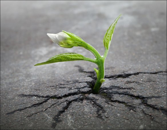 flower breaking through concrete