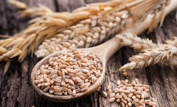 harvesting-grains wheat