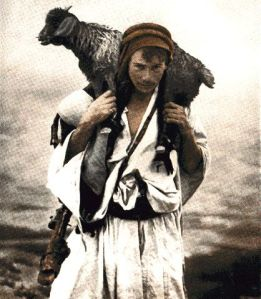shepherd carry sheep