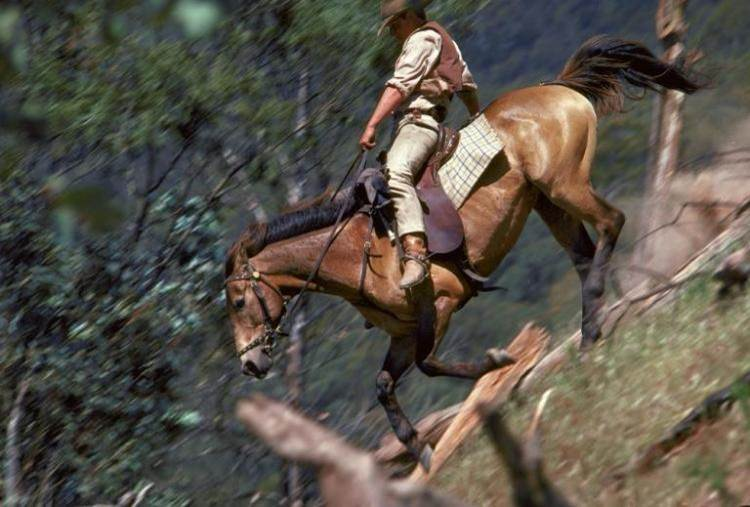 Man from snowy river jim horse